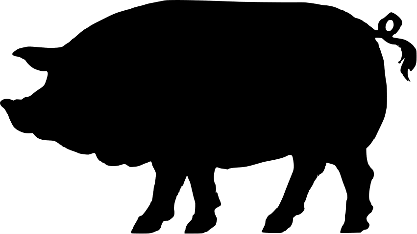 Image of a pig to represent swin flu
